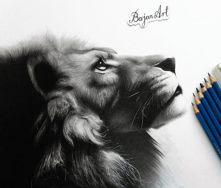 Lion drawing by Bajan Art