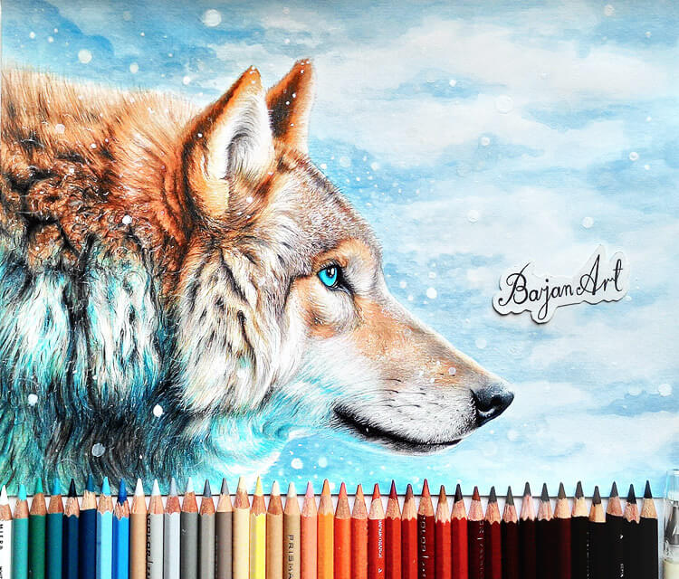 Winter is coming color drawing by Bajan Art
