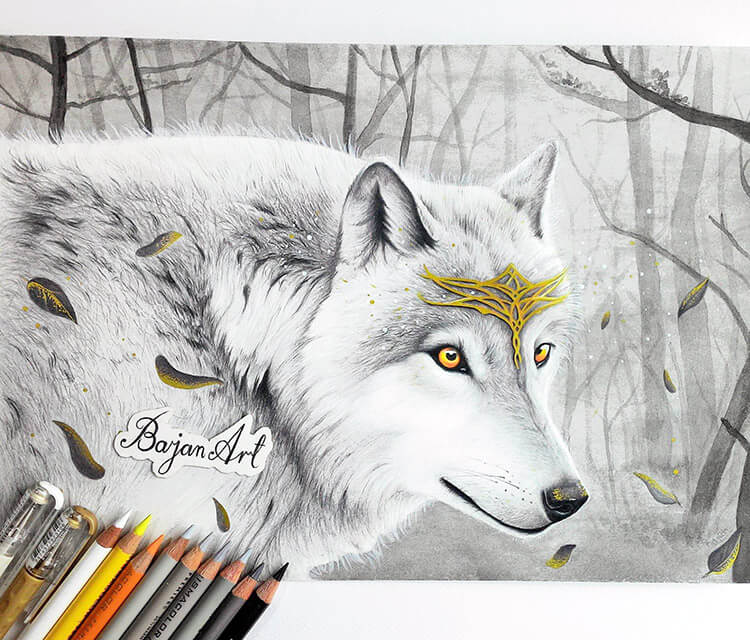 Wolf King color drawing by Bajan Art