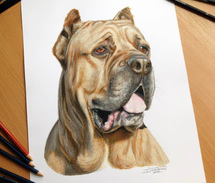 Color Pencil Drawing color drawing by Dino Tomic