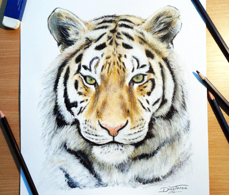 Color Tiger drawing by Dino Tomic