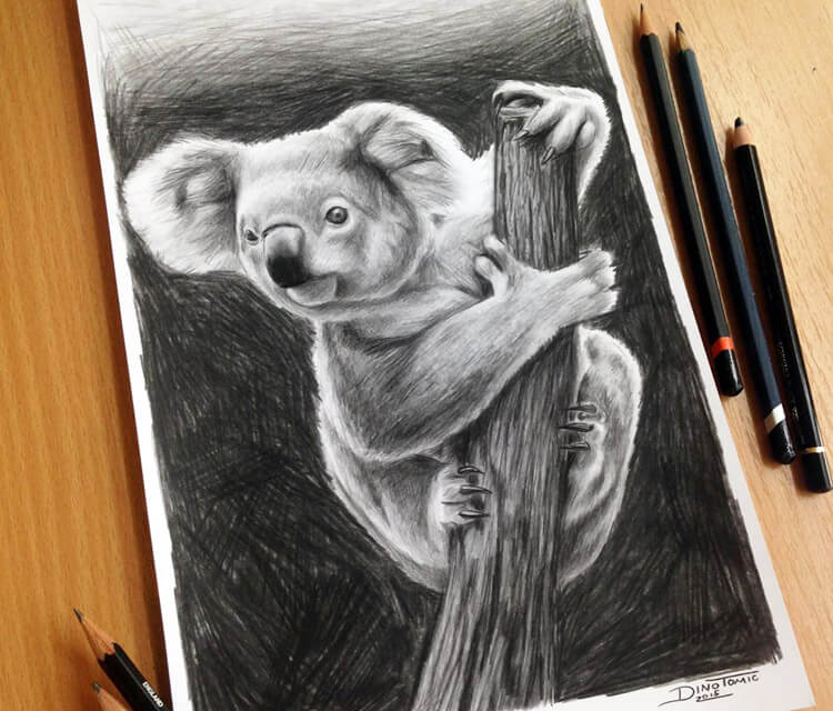 Koala drawing by Dino Tomic