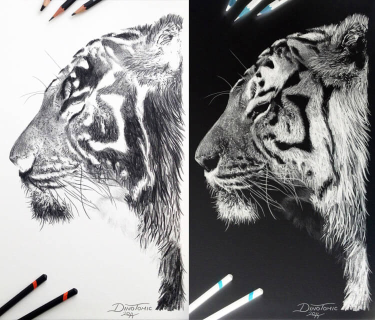 Tiger inverted drawing by Dino Tomic