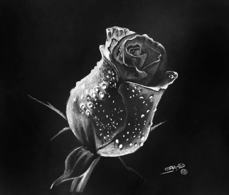Rose drawing by Garvel Art