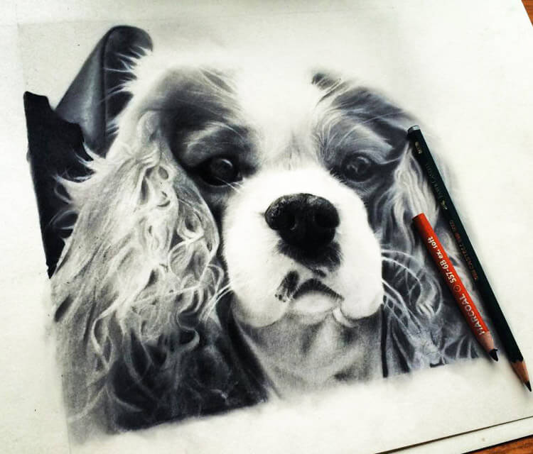 Doggy portrait drawing by Jonathan Knight Art