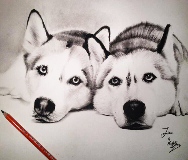Two Dogs drawing by Jonathan Knight Art