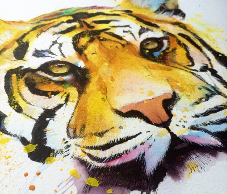 Watercolor Tiger painting by Jonathan Knight Art