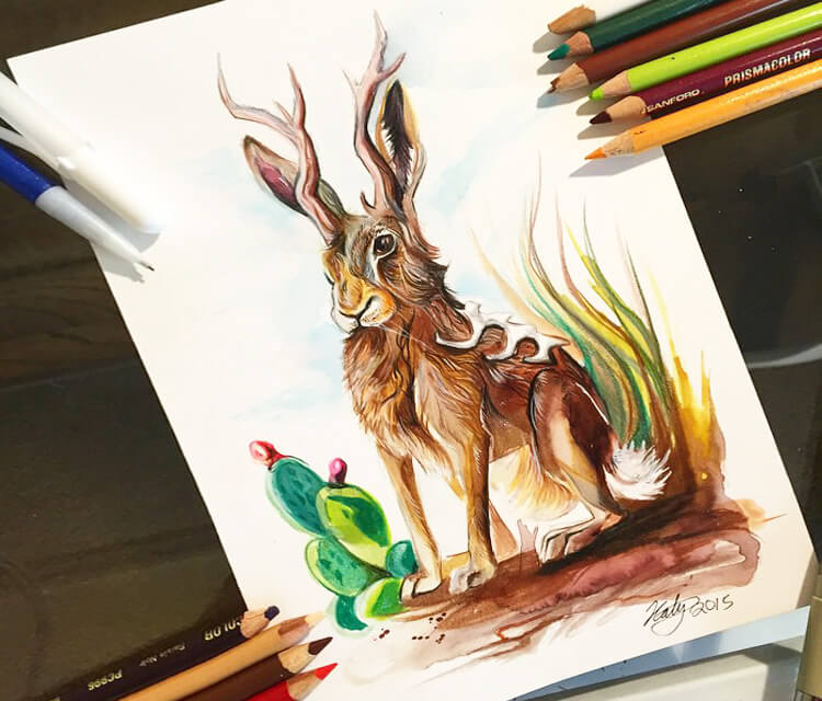 Jackalope color drawing by Katy Lipscomb Art