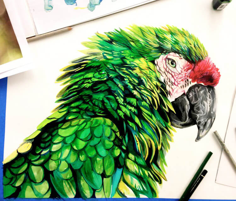 Parrot color drawing by Katy Lipscomb Art