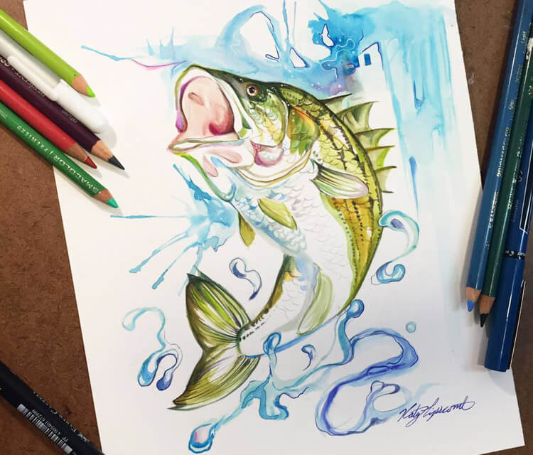 Striped Bass color drawing by Katy Lipscomb Art