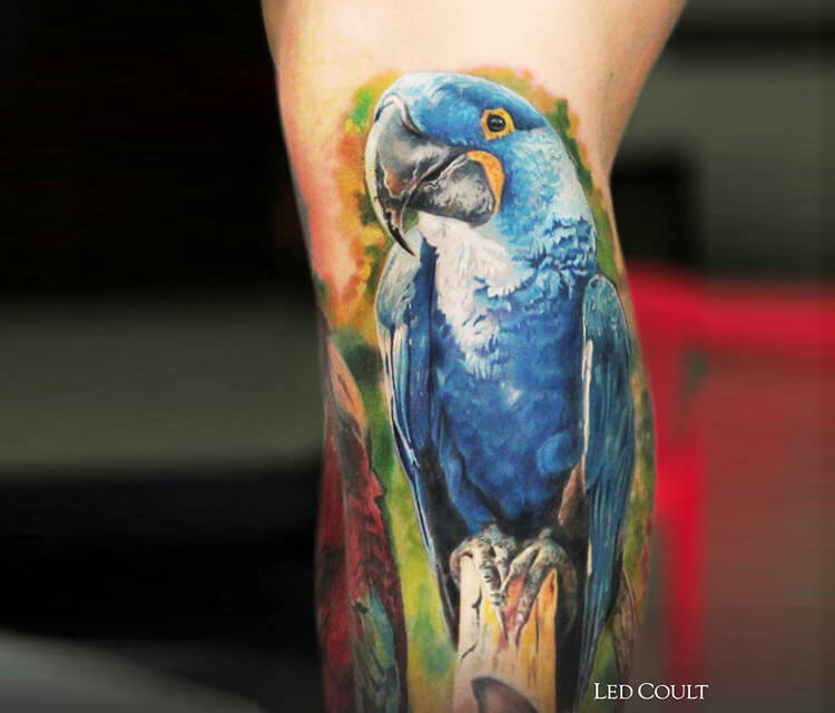 Parrot tattoo by Led Coult
