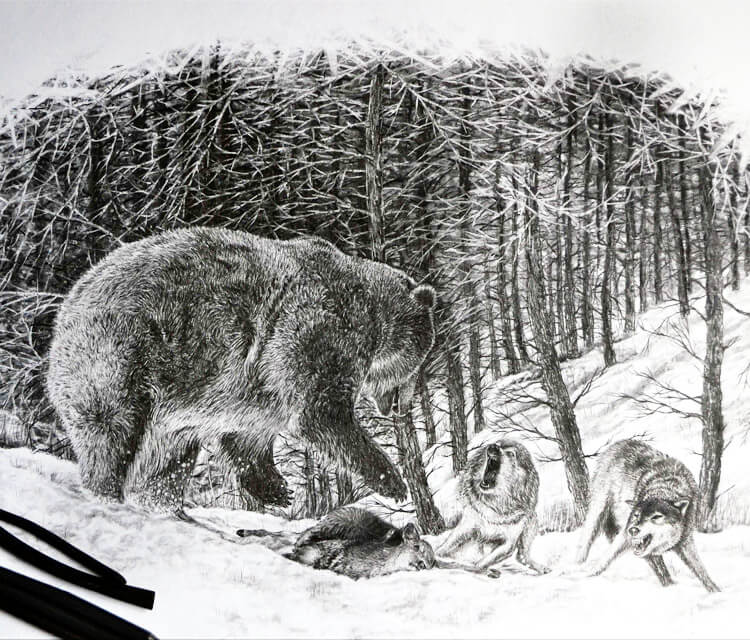 Bear wolves fight drawing by Lukas Lukero Art