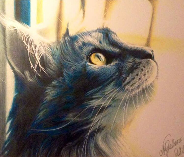 Cat drawing by Miriam Galassi