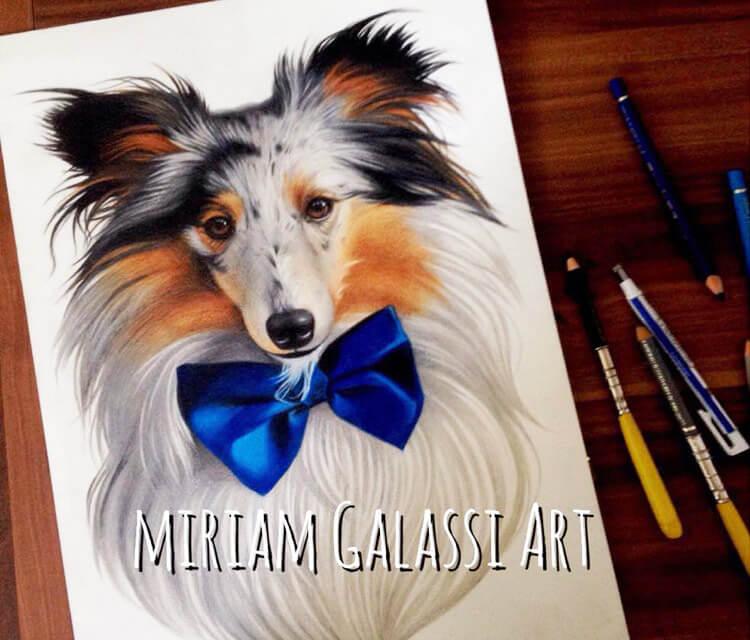 Hampe dog, drawing by Miriam Galassi