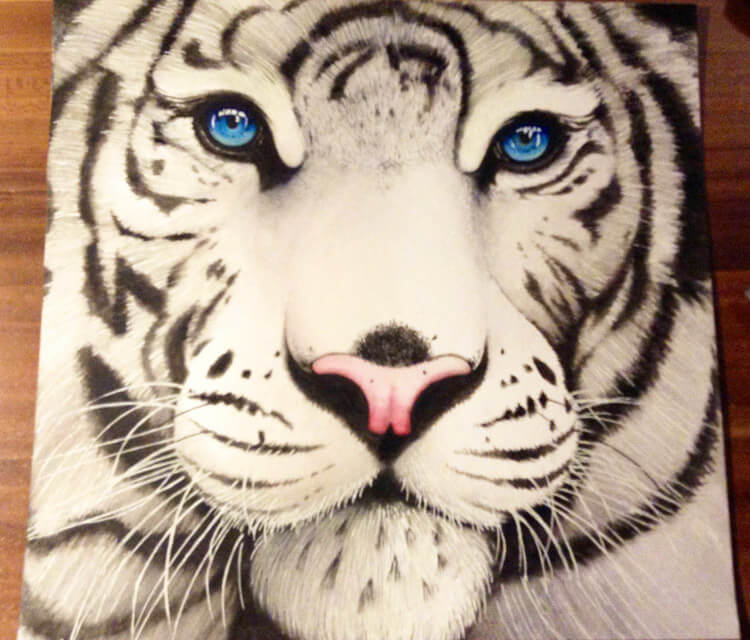 White tiger drawing by Miriam Galassi