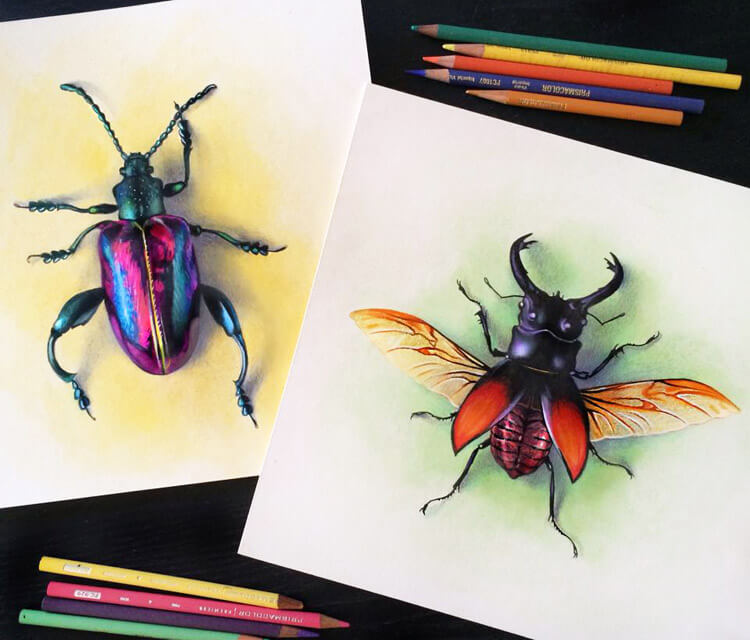 Beetles drawing by Morgan Davidson