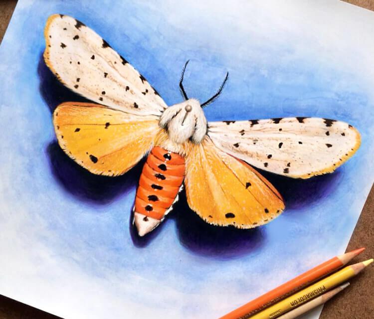 Moth drawing by Morgan Davidson