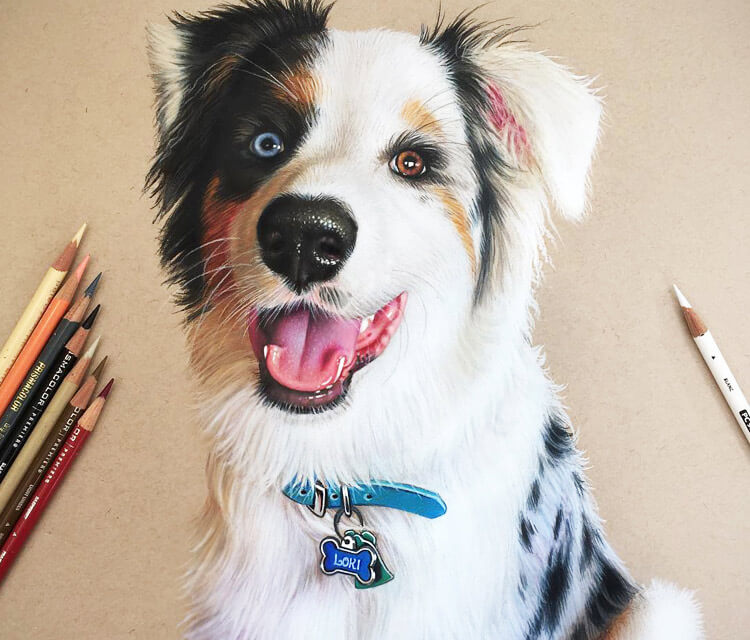 My little puppy Loki drawing by Morgan Davidson