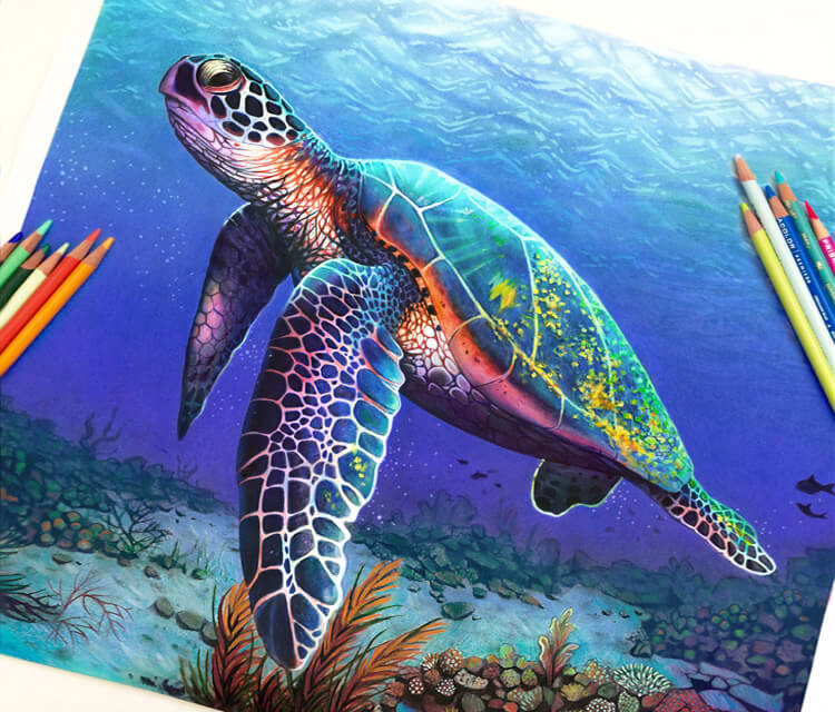 Turtle, drawing by artist Morgan Davidson