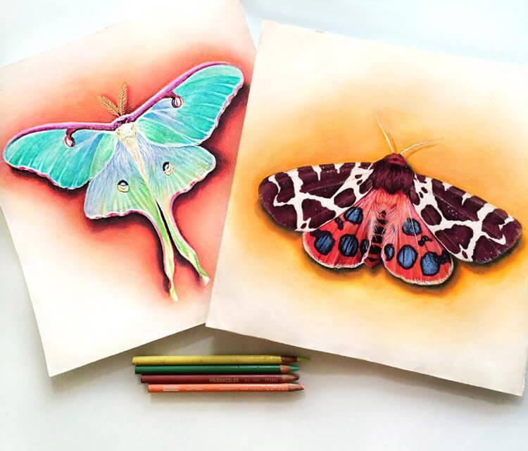 Moth studies drawing by Morgan Davidson