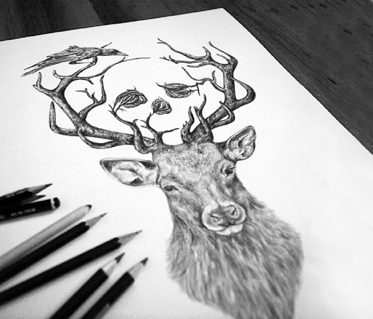 Deer with Crows drawing by Sneaky Studios