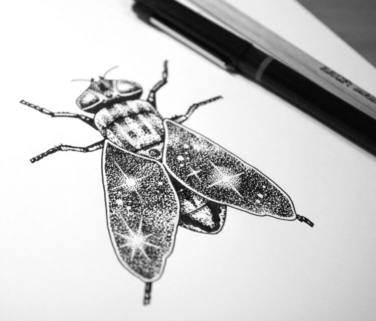 Space fly drawing by Sneaky Studios