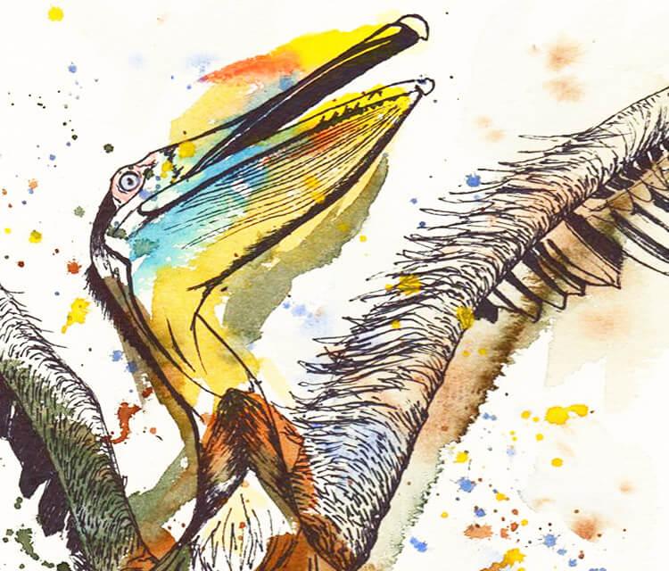 Brown Pelican by Tori Ratcliffe Art